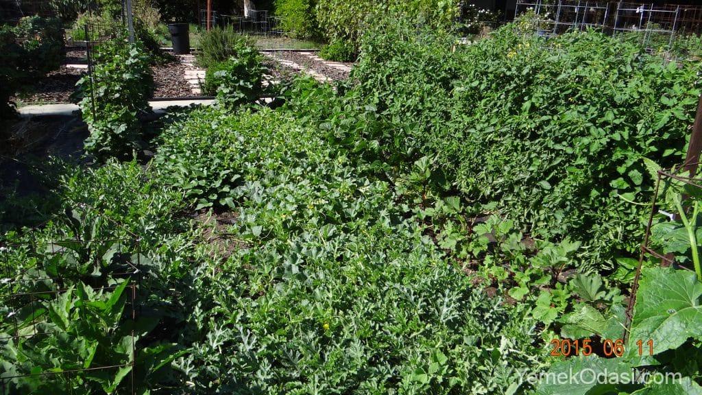 Bahçenizi Yeşillendirme Zamanı