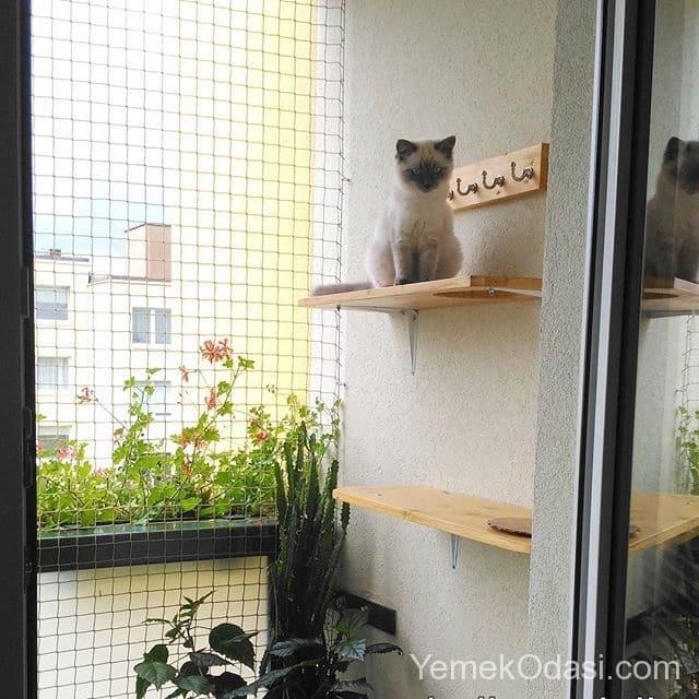 balkon-kedi-pilesi