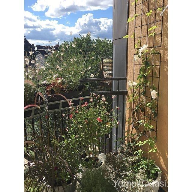 balkon-saksilari