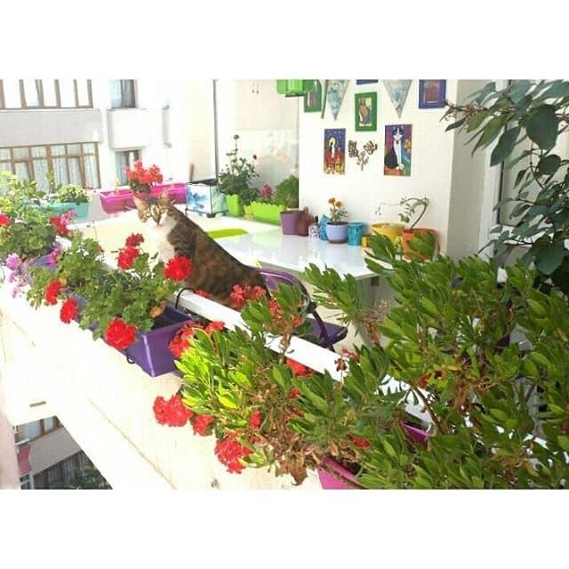renkli-balkon-dekorasyonu