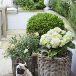 Bahçe Saksılar
