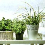 salonda yetismeye uygun bitkiler